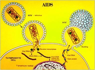 gambar%20virus%20hiv Peran Protein Inhibitor Untuk Menghambat Replikasi Virus HIV STIKes