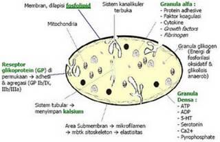 trombosit Aspek Biokimia Ikterus STIKes